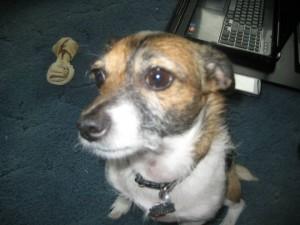 Rattle dog